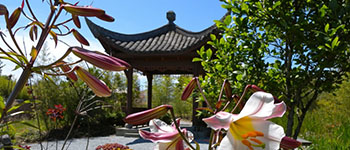 flowers blooming in the Chinese Garden at South Seattle College